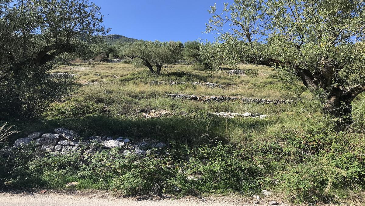 Plot 4000 sq m Vathi Ithaca Greece